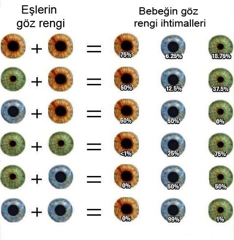 Bebek bebek sağlığı göz rengi hamilelik